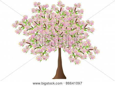 Spreading flowering tree