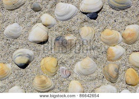 cluster of colorful seashells in beach sand