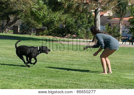 Labrador running to master