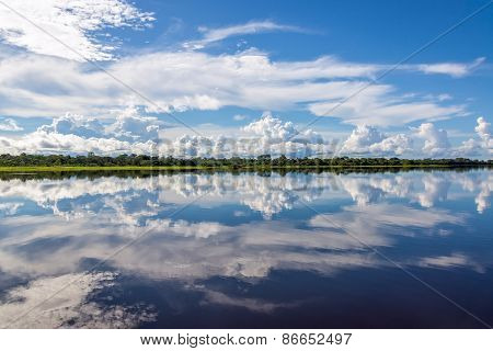 Amazonian Reflection