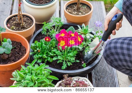 Detail of hand planting flowers and herbs