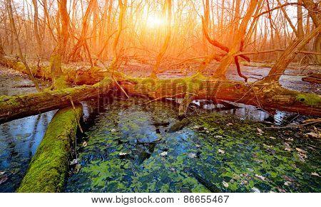 Sunset scene on bog in deep forest