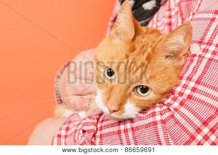 red cat holding in arms on orange background