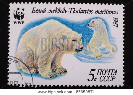 Moscow, Ussr- Circa 1987: Postage Stamp Printed Mail Ussr Shows Image Of A Polar Bear
