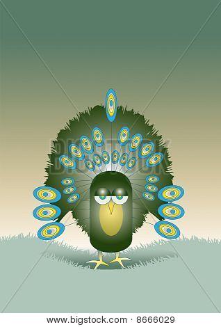 Single Peacock