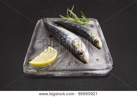 Fresh Fish On Ice.