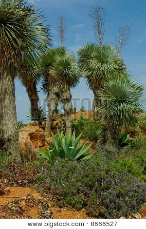 A Few Cactuses Look Like Palm Trees On The Hillock