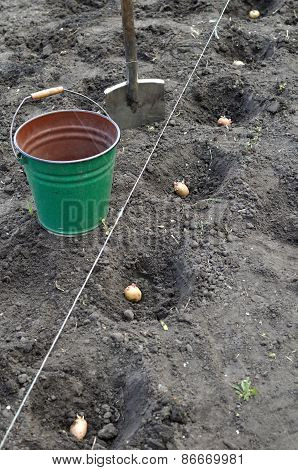 Finished Process Of Planting Potato Field