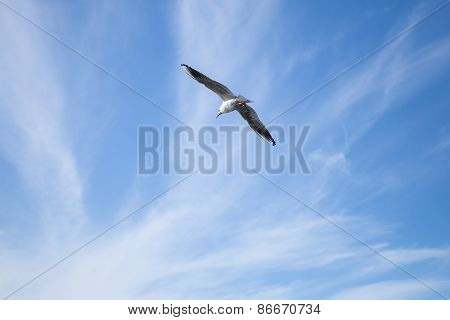 White Seagull Flying In Blue Cloudy Sky Background