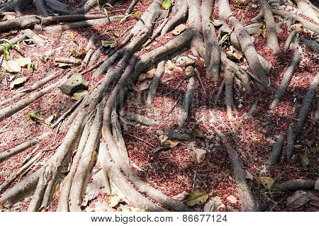 tree the roots