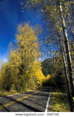 Colorful Fall Trees On Rural Road