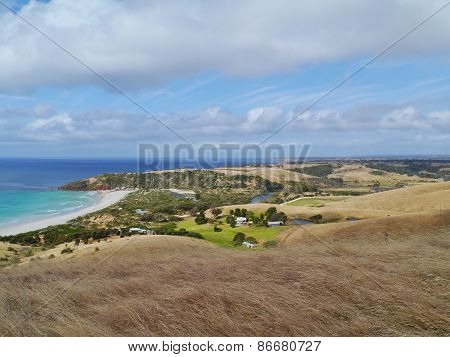 An Australian seascape with yellow grasses