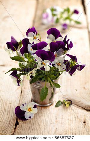 Purple Pansies.