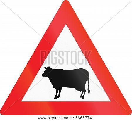Cattle Crossing In Austria