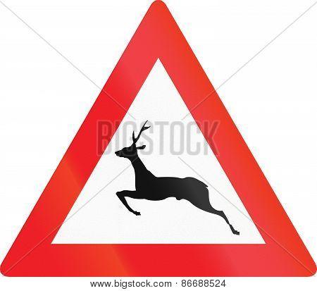 Wild Animals Crossing In Austria