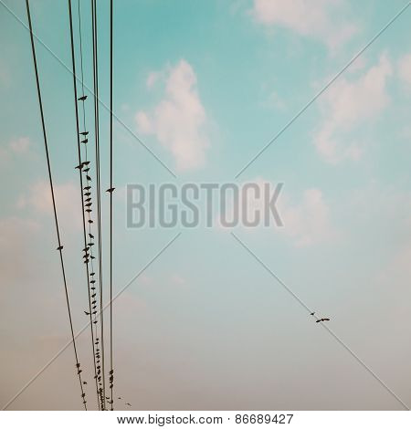 Birds On Power Line Cable Against Blue Sky With Clouds Background Vintage Retro Instagram Filter