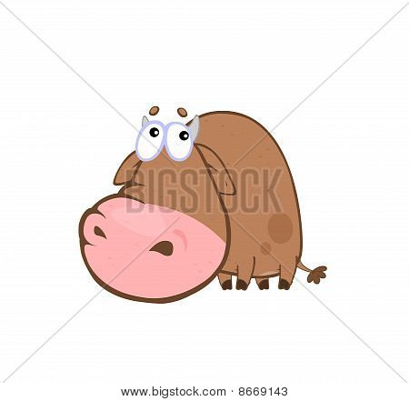 Shamed Cow