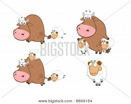 Annoying Sheep, Poor Bull