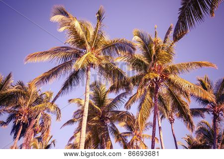 Coconut Palm Trees Over Clear Sky Background