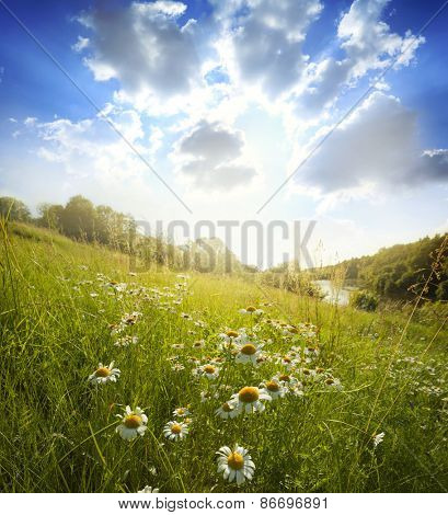 Field of spring flowers and sunny day