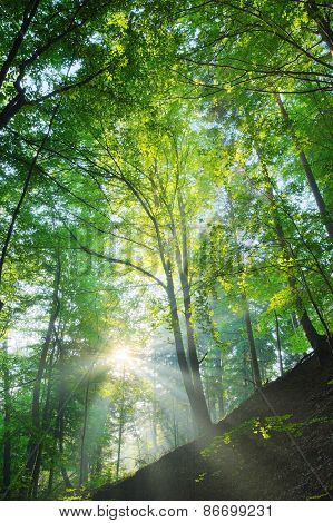 Sun Shining On The Forest Slope