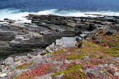 stock photo of chase  - Succulent plants on the rocks of Flinders Chase on Kangaroo island in Australia - JPG