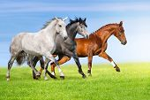 pic of galloping horse  - Group of three horse run gallop on gree grass against beautiful sky - JPG
