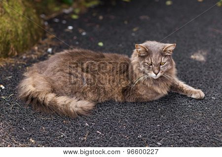 cat on the street