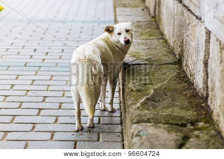 Homeless sad dog