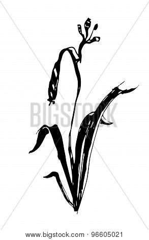 Vector Lily Flower Ink Sketch Graphics