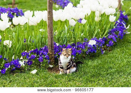 cute cat in the flowers
