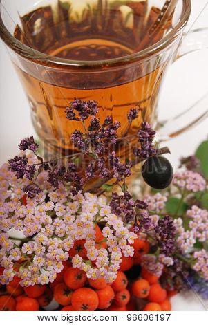 rowan and herbal tea