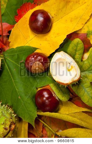 Composition of autumn chestnuts and leaves on isolated background