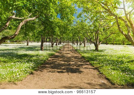 Summer Fruit Garden Walkway Under Sunlight And Blue Sky