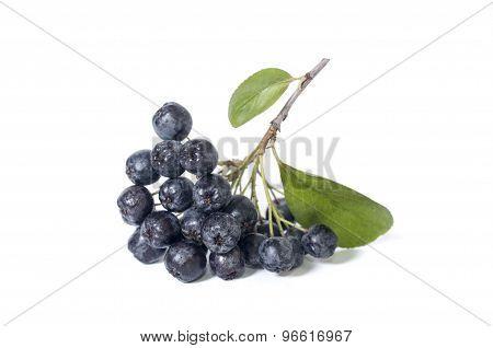 Chokeberry - Aronia