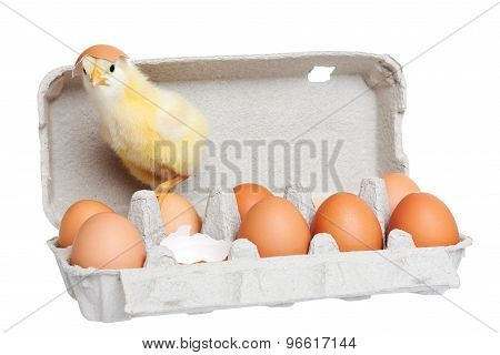 Egg Package With Cute Chick