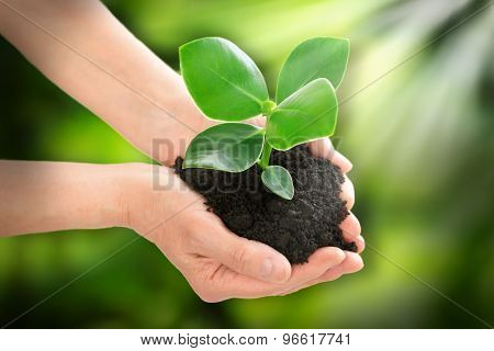 Hands Holding Plant Ecology Concept