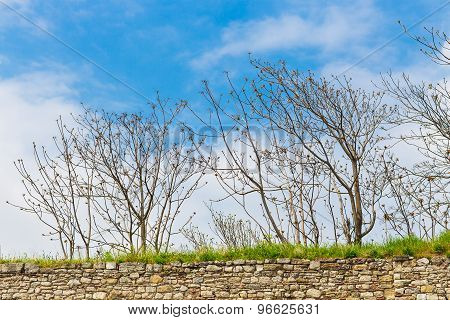 leafless trees and the sky