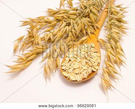 Grain Oats And Oatmeal