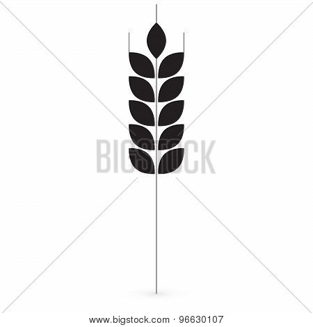 Ears of Wheat, Barley or Rye vector
