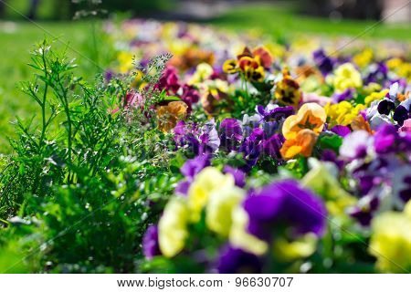 Colorful Flowers In The Park