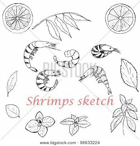 Shrimps set skcetch