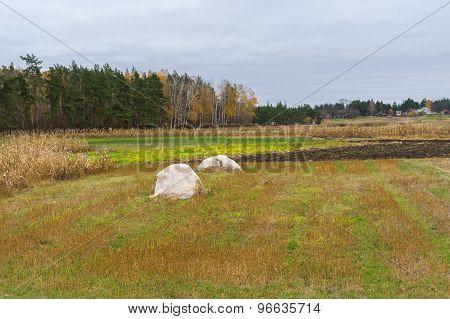 Rural landscape in central Ukraine