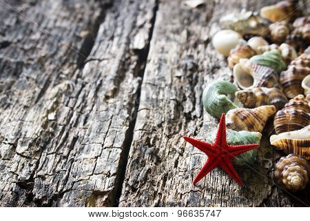 Seashells, Shellfish, Starfish On Wooden Background Close-up Selective Focus On The Right