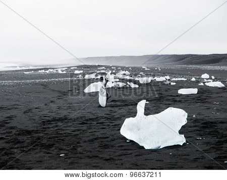 Black beach full of icebergs