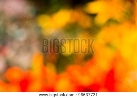 Red, Yellow, Orange Flowers Unfocused Bokeh Abstract Background