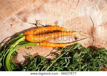 Fresh Dug Carrots On A Tree Stump