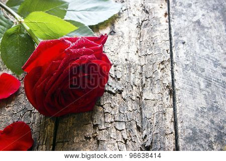 One Red Rose Petals Close Up On Wooden Background With Water Droplets On The Petals