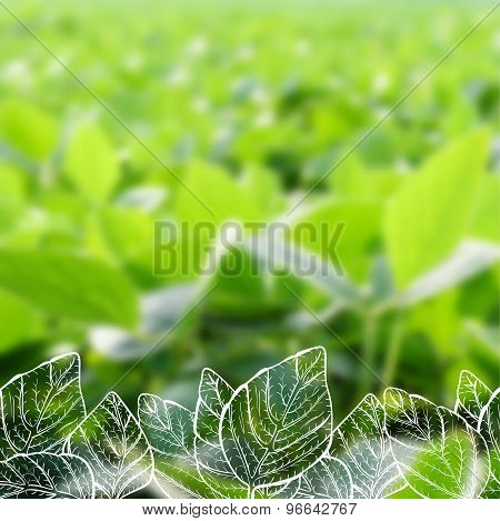 Hand Drawn Soy On Blurred Background