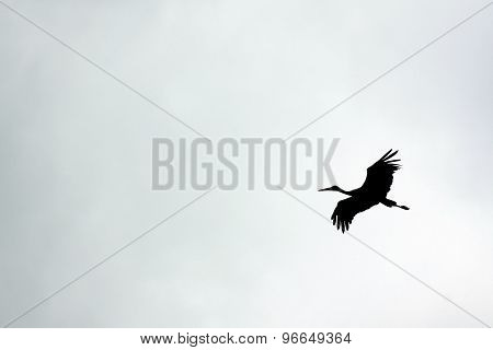 stork flying outdoor against the sky